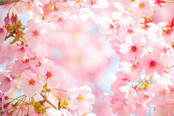 春になるときになる。花粉が気になる。そんな方必見☆